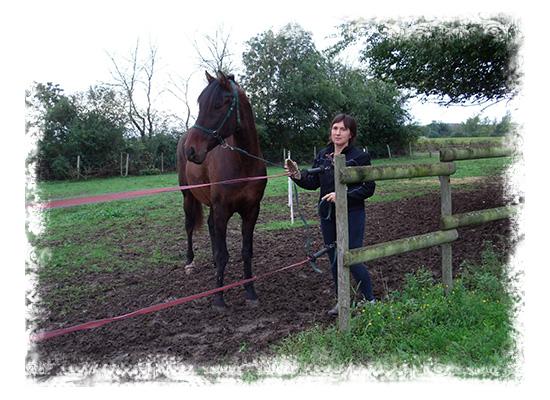 cavaliere-venue-au-logis-a-cheval